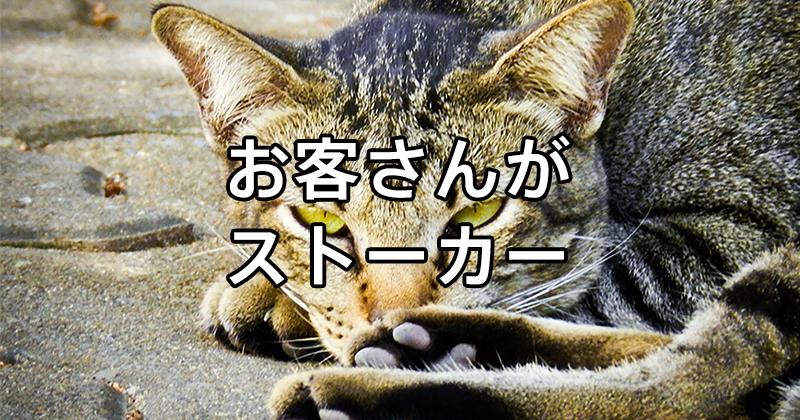 cat-175738_1280